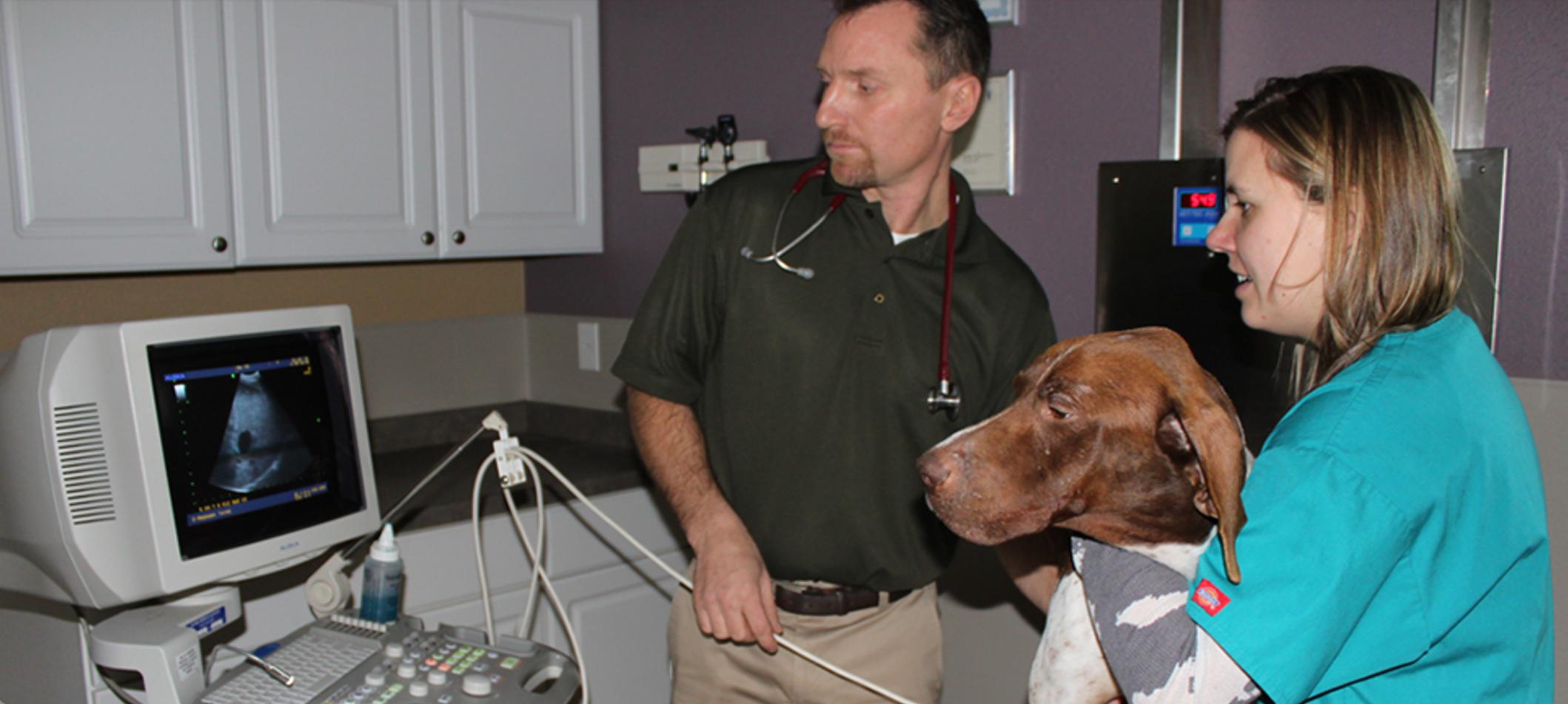 Managed IT Case Study: Lake Geneva Animal Hospital
